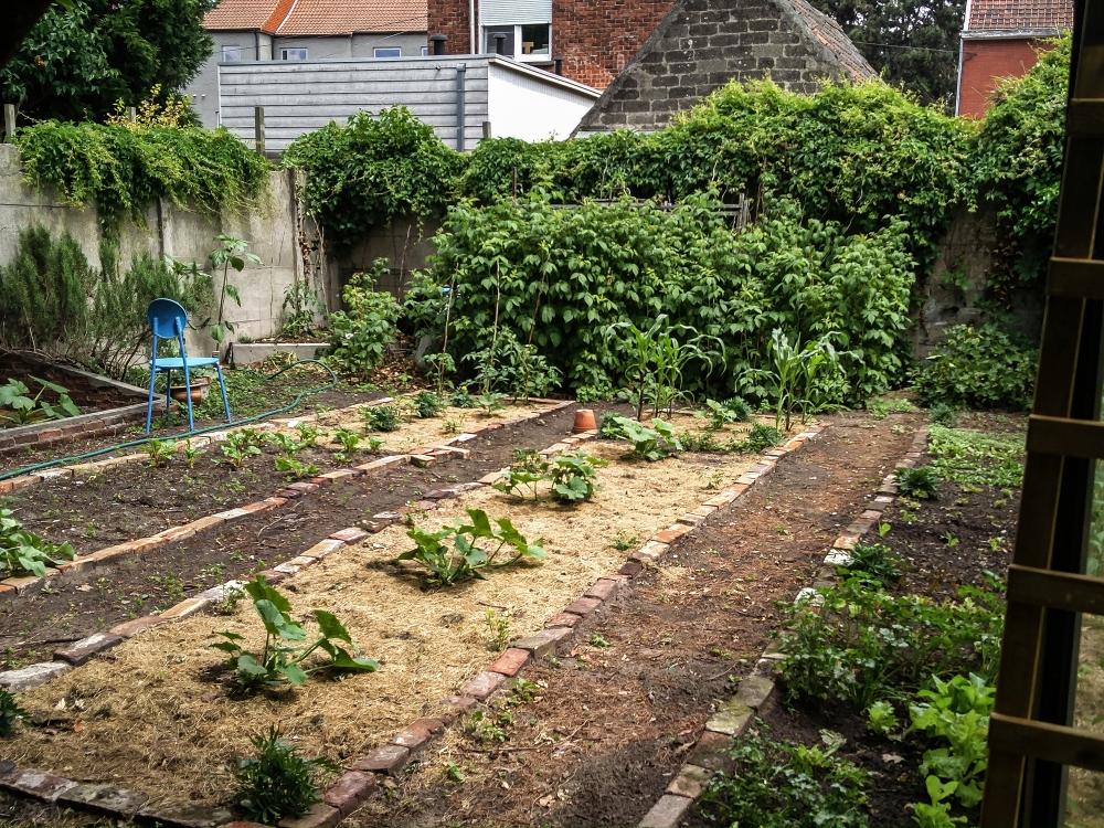 Kitchen garden 2017