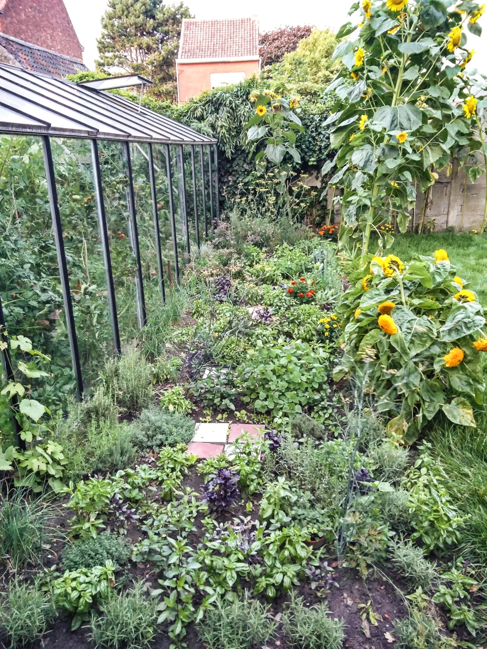 Herb garden with sunflowers